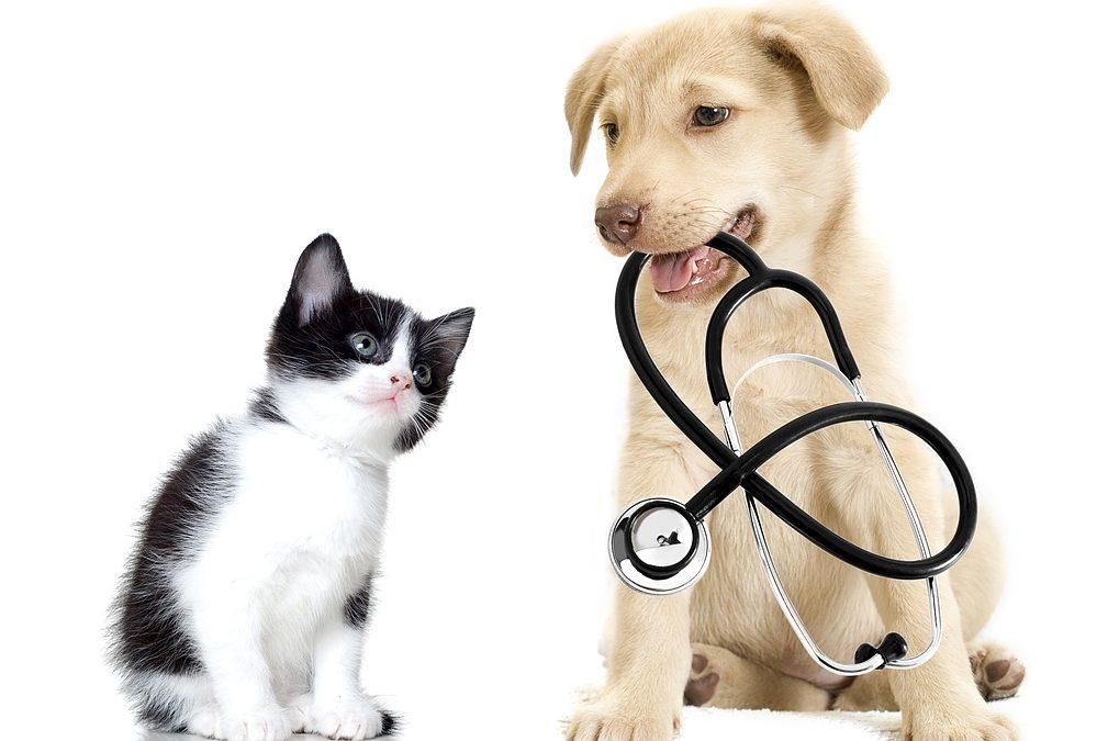 Stérilisation du chien et du chat : est-ce toujours bien nécessaire ?